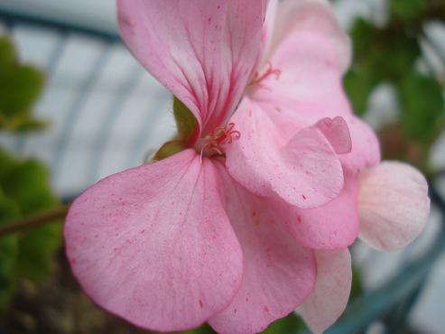 Dress Flower 1