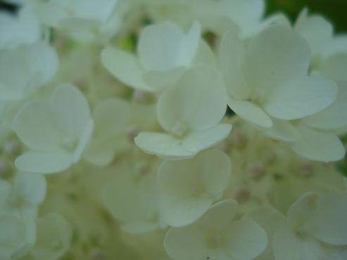 Dress Flower 2